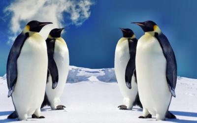 Google Pingouin 4.0